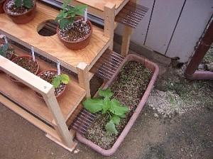 小鉢用花台-排水コンテナ